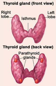 Introduction of Hypothyroidism