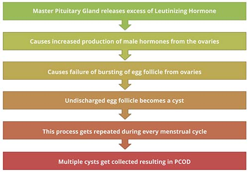 Polycystic Ovary Syndrome (PCOS) Causes